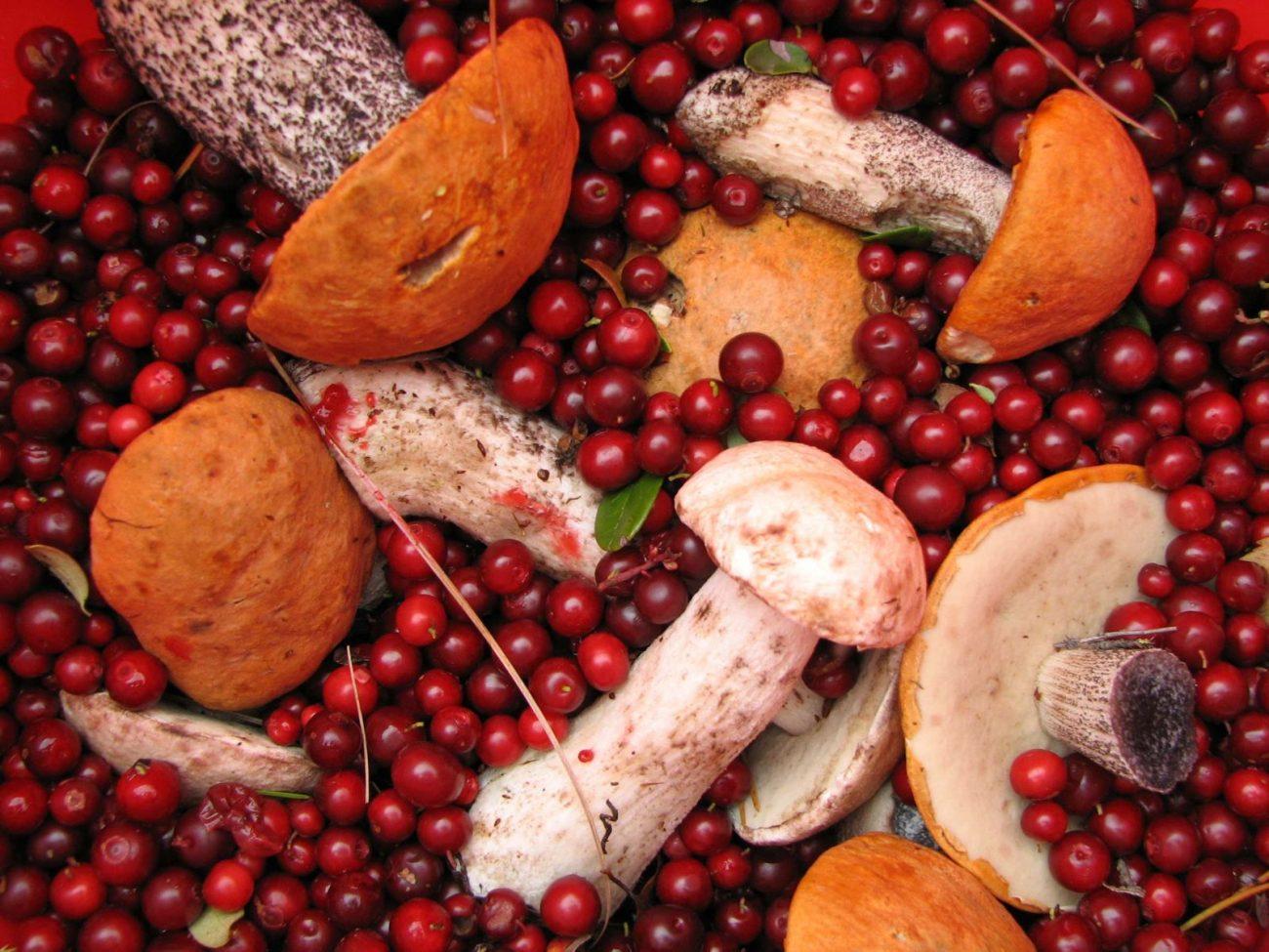 104 1 1 - Варенье из шишек, клюква и орехи в меду – Югра начала экспортировать дикоросы в Тайланд